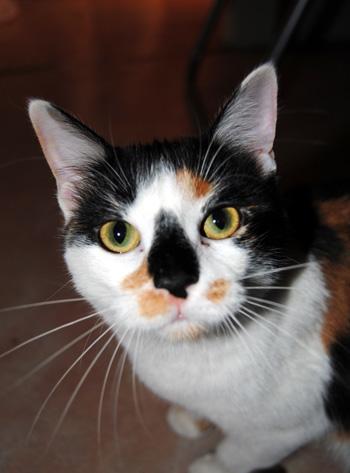 Katzen haben ein ausgeprägtes Revierverhalten in den eigenen vier Wänden.