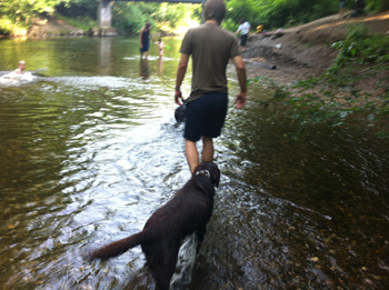 Mensch und Hund beim Spaziergang im Flussbett