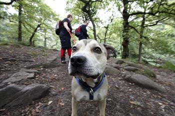 Der Hund muss nicht überall hin mitkommen, vor allem nicht in Gegenden, in denen Leishmaniose übertragen werden kann.