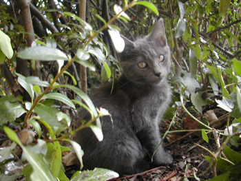 Katze im Freien