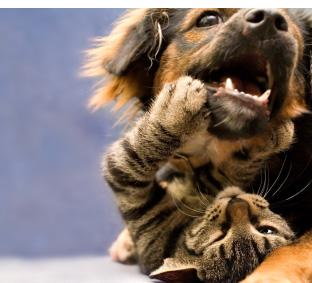 Hund und Katze spielen miteinander.